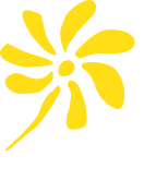 NZ Finance Ltd